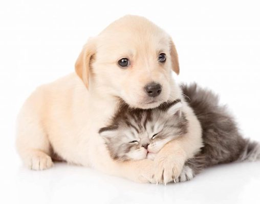 pet-clean-wipes-washing-dog-cat